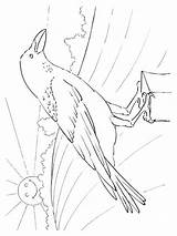 Coloring Pages Crows Printable Crow Birds 1000 Recommended sketch template