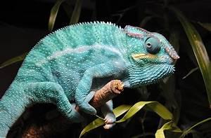 Große Reptilien Für Zuhause : in der auffangstation f r schildkr ten schlangen echsen ~ Lizthompson.info Haus und Dekorationen