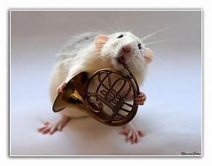 rat playing musical instruments by ellen van deelen #cute ...