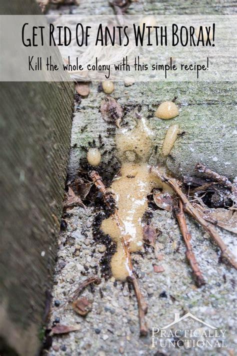 ways  banish bugs   barbecue