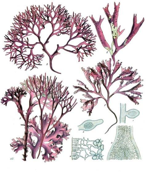 uv le für pflanzen violetinis vaistinis drebuluotis iš jamaikos giedras
