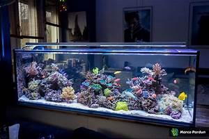 Aquarium Als Raumteiler : 400l raumteiler 150x50x50cm mein aquariumtagebuch ~ Michelbontemps.com Haus und Dekorationen