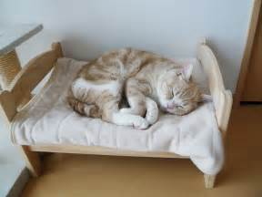 cat on bed japanese cat owners turn ikea doll beds into adorable cat