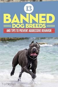 203 best dog training tips tricks images on pinterest With dog behavior training tips