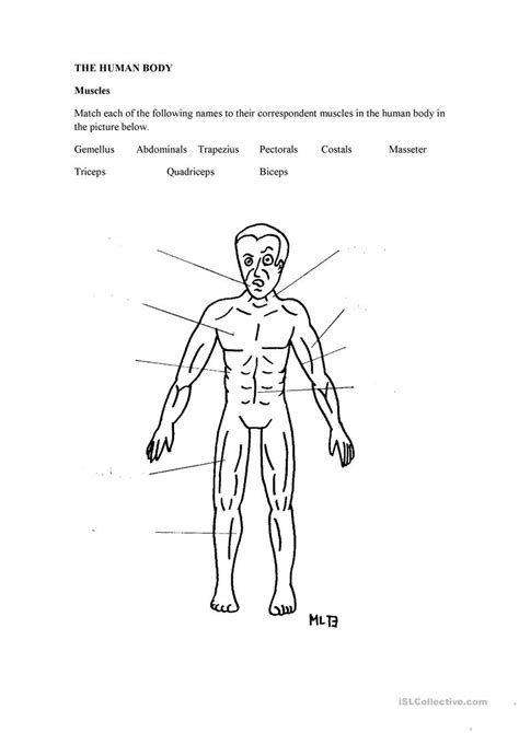the human body muscles worksheet free esl printable