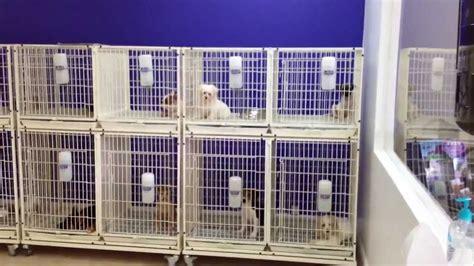 puppy stores in miami doral fl youtube