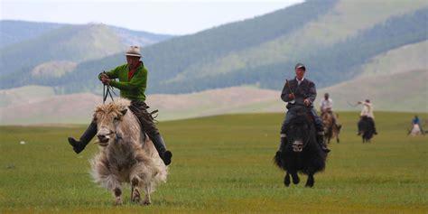 cuisine but 3d yak festival mongolia mongolia tours