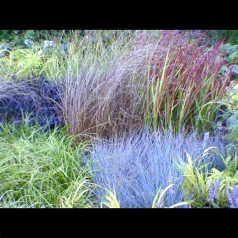 different grasses ornamental grasses in the garden by waterfieldfox2 351 gardening ideas to discover on