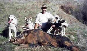 Siberian Hunting Dog