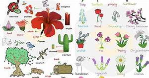 List, Of, Plant, And, Flower, Names, In, English, With, Pictures, U2022, 7esl