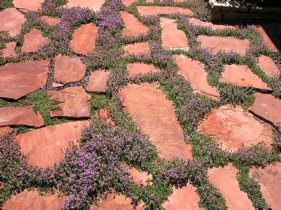 what to put between flagstones on a patio savvy housekeeping 187 different types of flagstone patios