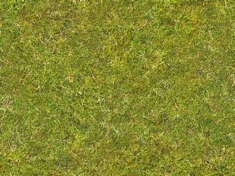 moss  background texture ground moss green