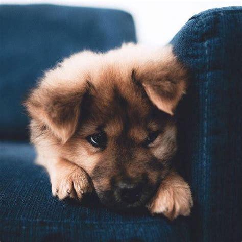 25 Best Too Cute Puppies Ideas On Pinterest Cutest