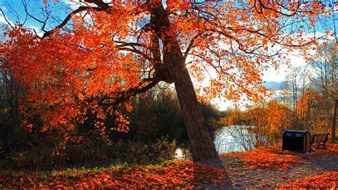 Autumn Wallpapers 4k by 4k Fall Wallpaper Wallpapersafari