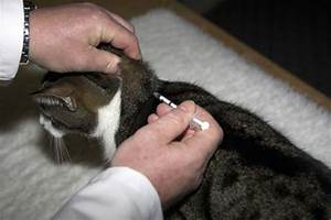 Зависит или нет диабет от щитовидки