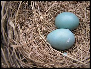 175/365 House finch eggs. | Flickr - Photo Sharing!