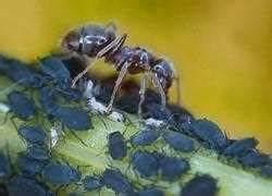 Ameisenplage Im Haus : pin bek mpfen sie die ameisen nicht mit gift petera pixelio on pinterest ~ Orissabook.com Haus und Dekorationen