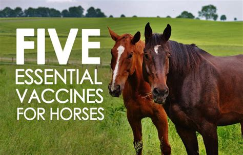 vaccines horse five horses essential must allivet types vaccine different care should pet given