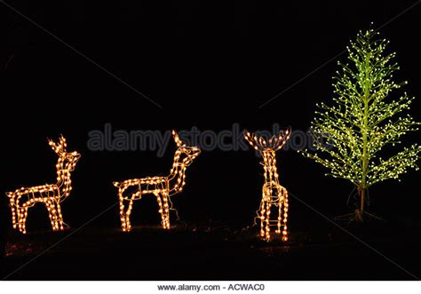 illuminated reindeer stock photos illuminated reindeer