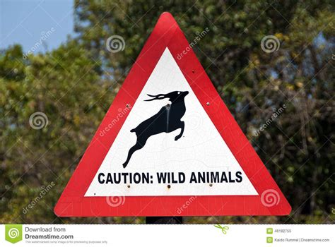 Caution Wild Animals Stock Image Image Of Close, Ahead. Cheapest Car Insurance In New York. Home Security Systems Consumer Review. Term Life Insurance Companies. Publicly Traded Technology Companies. Skin Care Acne Treatment Sql Server Reporting. Faith Based Rehab Centers Used Porsche Price. Business Offices For Rent Ipa Alcohol Content. Community Rewards Program Il State University