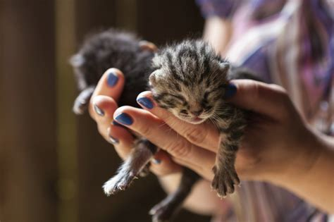save kittens lives adventure cats