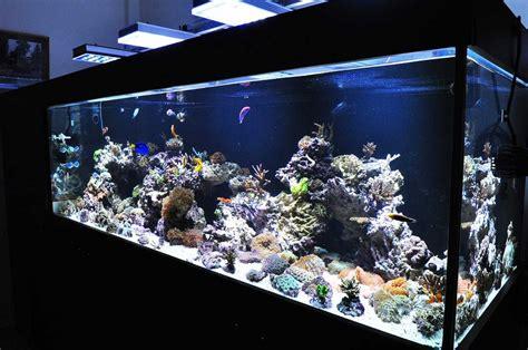 saltwater tank lights led aquarium lighting orphek april 2011