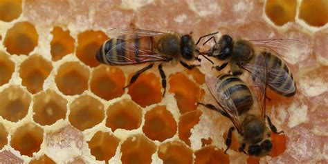 learn  bees  beekeeping   hands