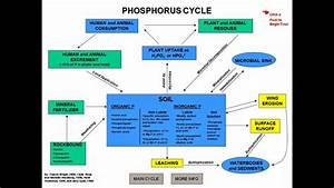Carbon Cycle For Kids   Search Results   Calendar 2015