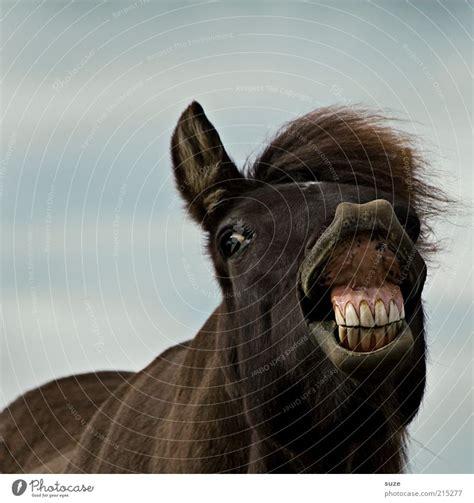 joy animal funny brown  royalty  stock photo