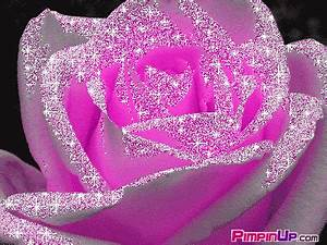 Pink Rose Animated Wallpapers - flowershdwallpapers
