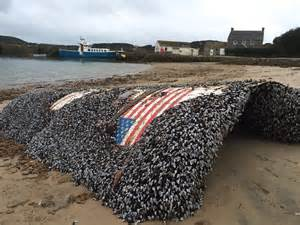 Debris from SpaceX's July Falcon 9 launch washes up in ...