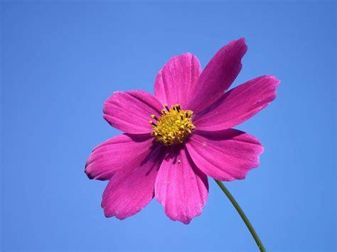 picture blue sky summer flower nature petal
