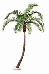 überwintern Von Palmen : palmen k nstlich textilpflanzen kunstpflanzen ~ Michelbontemps.com Haus und Dekorationen