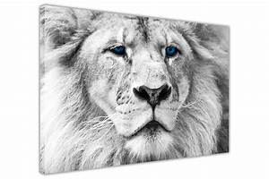 RARE WILD WHITE LION WITH BLUE EYES CANVAS WALL ART ...