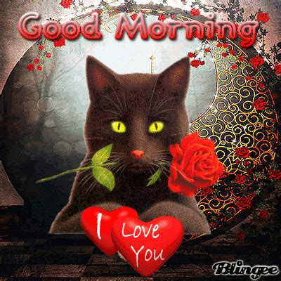 good morning  love  pictures   images