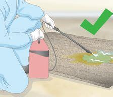 pet  animal stain removal   articles  wikihow