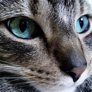 У кота увеличена печень чем лечить лекарства