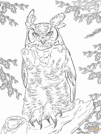Owl Coloring Realistic Horned Supercoloring Uhu Virginia