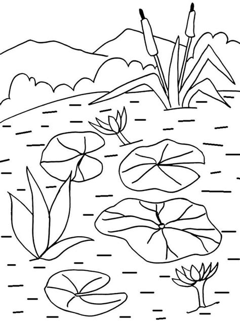 water lily coloring pages   print water lily