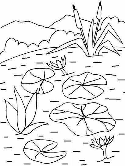 Coloring Lily Water Pages Pad Flower Printable