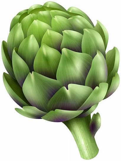 Clip Artichoke Clipart Transparent Vegetables Yopriceville Var