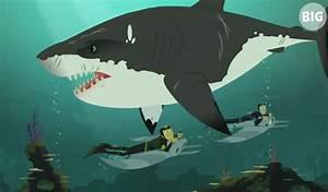 Stuck on Sharks   Wild Kratts Wiki   FANDOM powered by Wikia