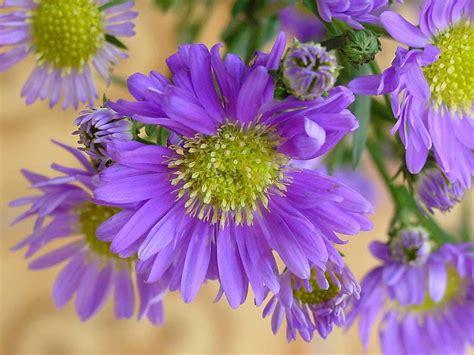 Summer Flower Backgrounds