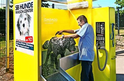 hunde waschanlage auto und hund  einem aufwasch