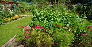 Quand Planter Lavande Dans Jardin : planter des fleurs au potager entretenez et embellissez votre jardin avec mr bricolage ~ Dode.kayakingforconservation.com Idées de Décoration