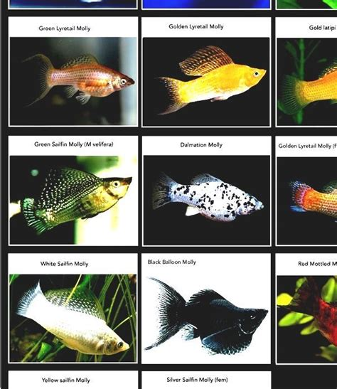 list  freshwater aquarium fish species fish  fish