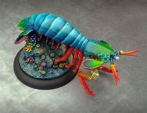 Diagram Of Mantis Shrimp