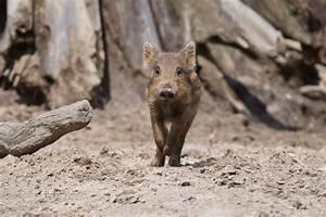 Gibt Es Mirabeau Nicht Mehr : gibt es sie bald nicht mehr foto bild tiere zoo wildpark falknerei s ugetiere bilder ~ Orissabook.com Haus und Dekorationen