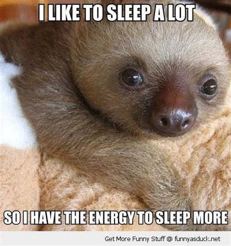 Cute Sloth Meme - 17 best images about sloths on pinterest the internet creepy sloth and laughing