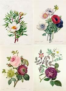 25+ best images about Botanical Illustration on Pinterest ...